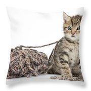 Kitten With Yarn Throw Pillow