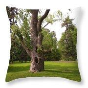 Knurled Tree Throw Pillow