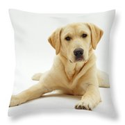 Labrador X Golden Retriever Puppy Throw Pillow by Jane Burton