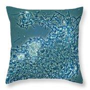 Lactobacillus Sp. Bacteria, Lm Throw Pillow