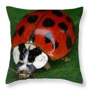 Ladybird Beetle Throw Pillow