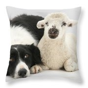 Lamb And Border Collie Throw Pillow