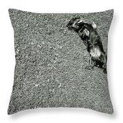 Lazy  Daschund Throw Pillow