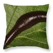 Leech Throw Pillow