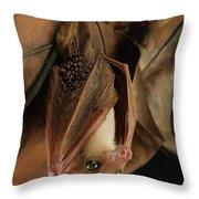 Lesser Long-tongued Fruit Bat Throw Pillow