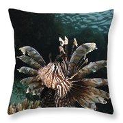 Lionfish, Indonesia Throw Pillow