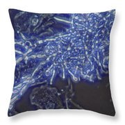 Lm Of Candida Albicans Throw Pillow