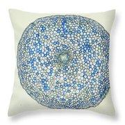 Lm Of Ranunculus Stem Throw Pillow by M. I. Walker