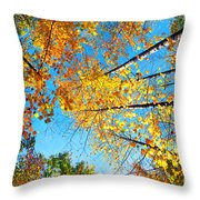 Looking Up At All The Colors Throw Pillow