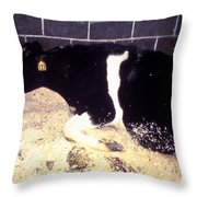 Mad Cow Disease Throw Pillow