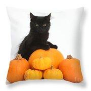 Maine Coon Kitten And Pumpkins Throw Pillow