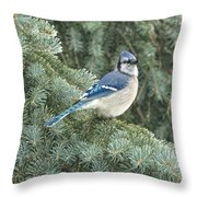 Majestic Blue Jay Throw Pillow