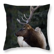 Male Elk Cervus Canadensis Throw Pillow by Richard Wear