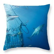 Male Great White Shark And Divers Throw Pillow