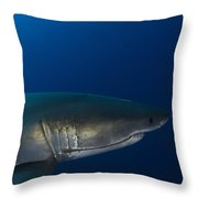 Male Great White Shark, Guadalupe Throw Pillow