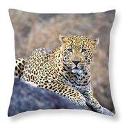 Male Leopard Throw Pillow