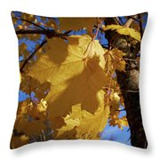 Maple In Fall Throw Pillow