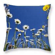 Marguerite Leucanthemum Vulgare Throw Pillow
