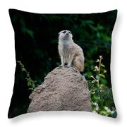 Meerkat Throw Pillow