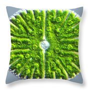Micrasterias Denticulata Throw Pillow