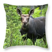 Moose. Two Month Old Moose Standing Throw Pillow