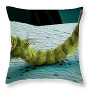 Mosquito Larva, Sem Throw Pillow