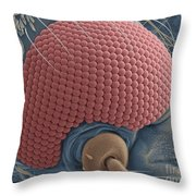 Mosquitos Head Throw Pillow
