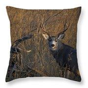 Mule Deer Buck Throw Pillow