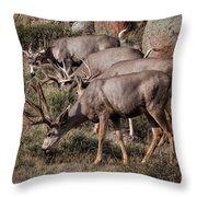Mule Deer Bucks Throw Pillow
