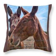 Mule Wink Throw Pillow