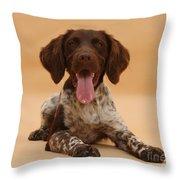 Munsterlander Throw Pillow