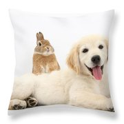 Netherland-cross Rabbit And Golden Throw Pillow