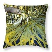 New Zealand Fur Seal Arctocephalus Throw Pillow