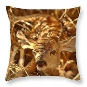 Newly Born Fawn Hiding In A Saskatchewan Field Throw Pillow