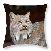North American Lynx Throw Pillow by Paul Fell