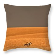 Northern Pintail Pair Out Walking In Saskatchewan Field Throw Pillow