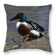 Northern Shoveler Throw Pillow