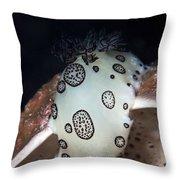 Nudibranch Feeding On A Sponge, Papua Throw Pillow