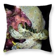 Nudibranch Feeding On Algae, Papua New Throw Pillow