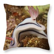 Nudibranch Feeding On The Reef, Fiji Throw Pillow