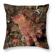 Ocellate Octopus With Two Blue Spots Throw Pillow