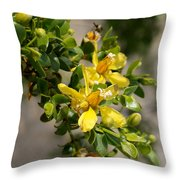 Ocotillo Wild Flower Throw Pillow