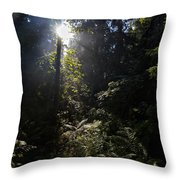 Old Forests At Evo Throw Pillow