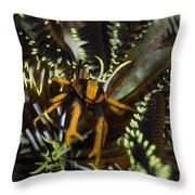 Orange And Brown Elegant Squat Lobster Throw Pillow