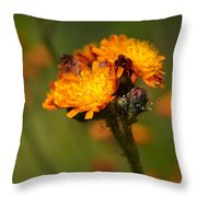 Orange Hawkweed Throw Pillow