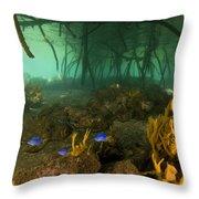Orange Sponges Grow Throw Pillow