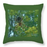 Orb Spider      Summer           Indiana Throw Pillow