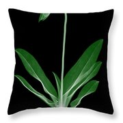 Orchid Plant X-ray Throw Pillow