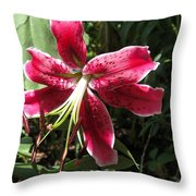 Orienpet Lily Named Scarlet Delight Throw Pillow