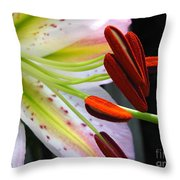 Oriental Lily Hybrid Named Mojave Throw Pillow